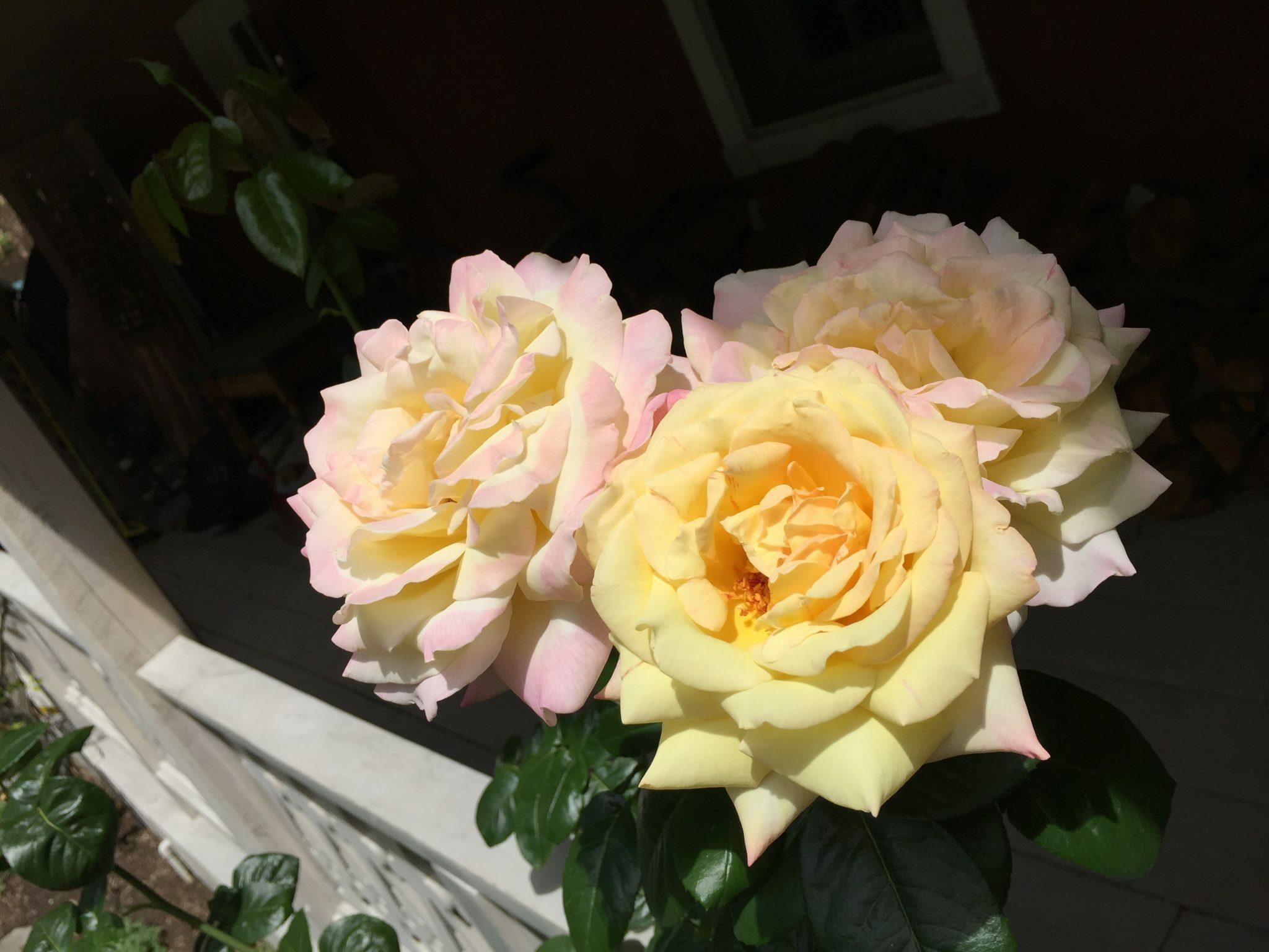 Heart Centered Sharing | New York , New Mexico | Deborah